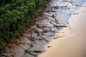 O desmatamento da Amazônia e das florestas brasileiras estão entre as prioridades no debate ambiental no mundo